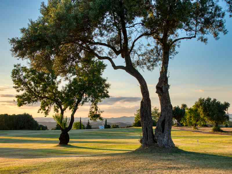 Golf-Tavira-Club-Gal-14
